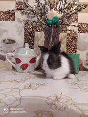 Мини крольчонок